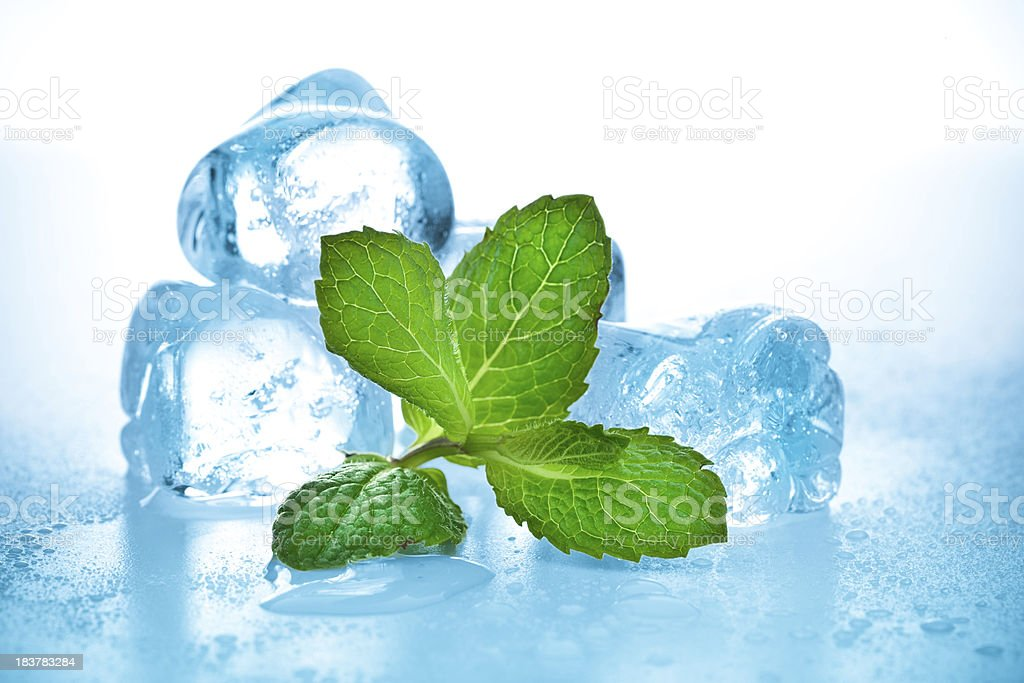 cool mint royalty-free stock photo