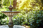 beautiful flowering plants, around the fountain, in a small courtyardsucculent close-up in the sand, decorated with stones and mossbeautiful flowering plants, around the fountain, in a small courtyard