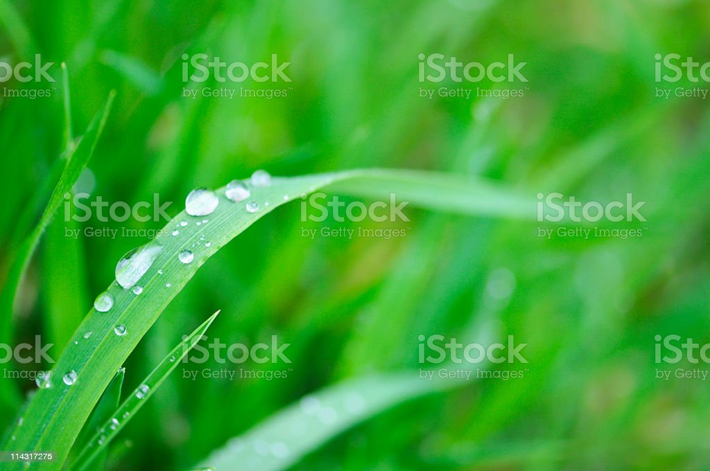 Cool Spring Grass royalty-free stock photo