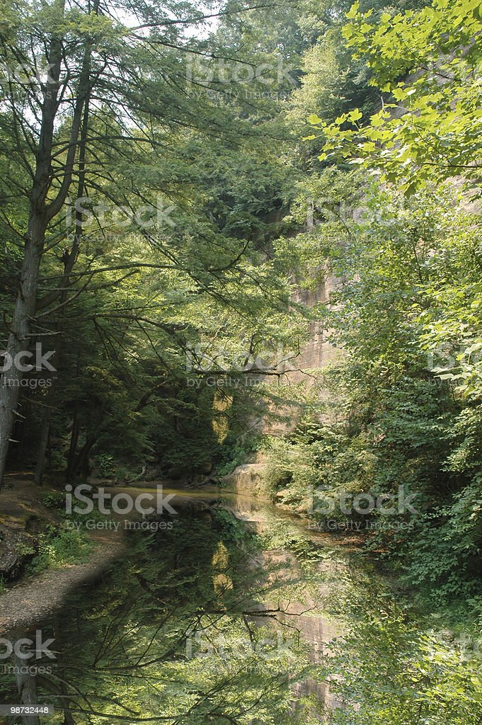cool summer forest 免版稅 stock photo