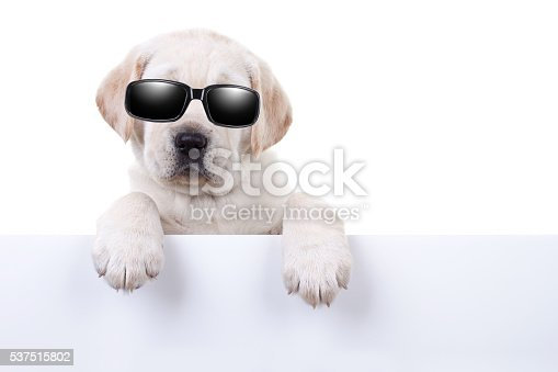 istock Cool Summer Holiday Dog Sign 537515802