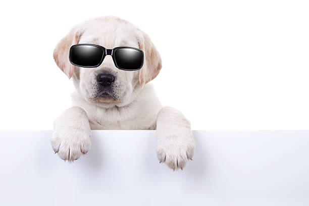 kühler sommer urlaub dog sign - sprüche über reisen stock-fotos und bilder