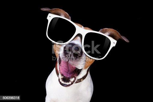 istock cool sunglasses dog 506396318
