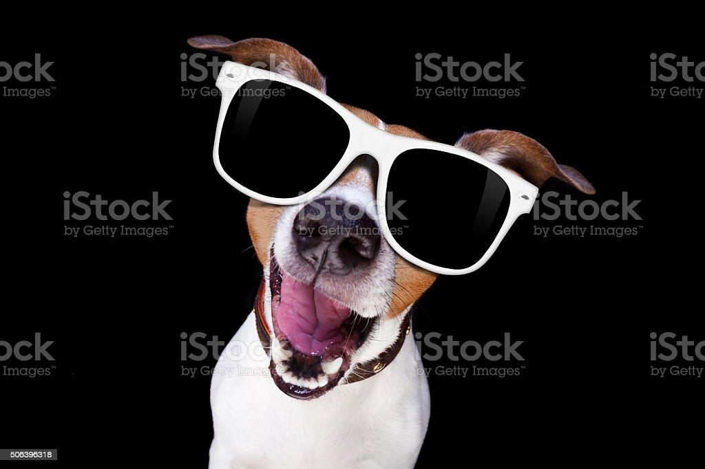 cool sunglasses dog stock photo