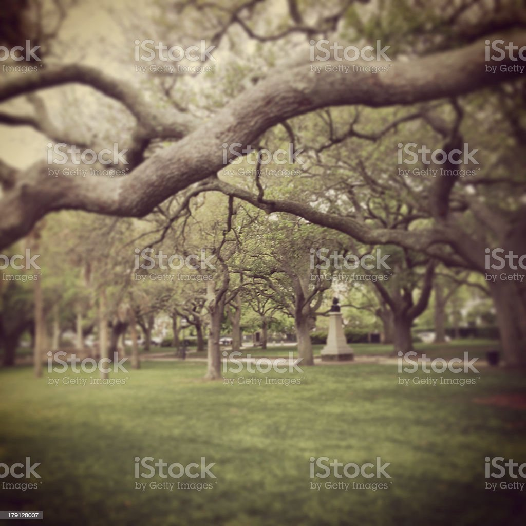 Cool Trees in Charleston, SC royalty-free stock photo