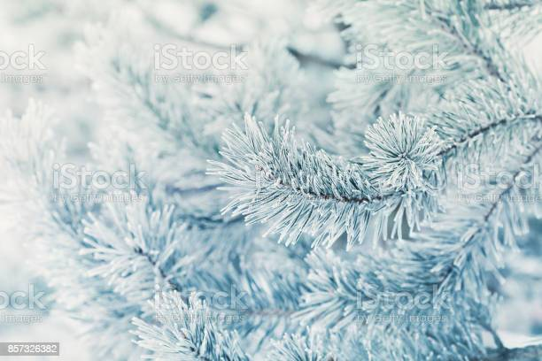 Photo of Cool winter background from pine tree covered with hoarfrost, frost or rime in a snowy forest.