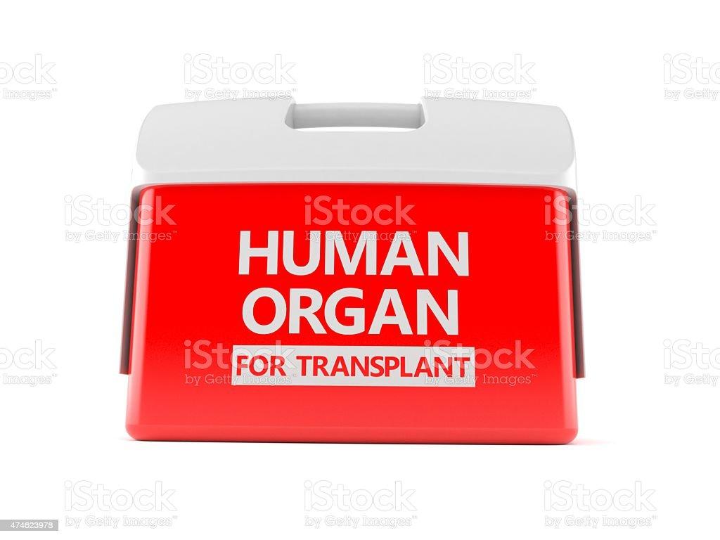Cooler for human organ stock photo
