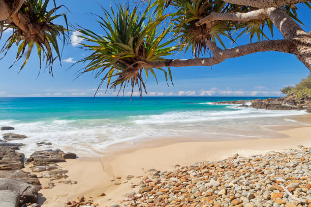 coolum beach on queensland's sunshine coast in australia - queensland foto e immagini stock