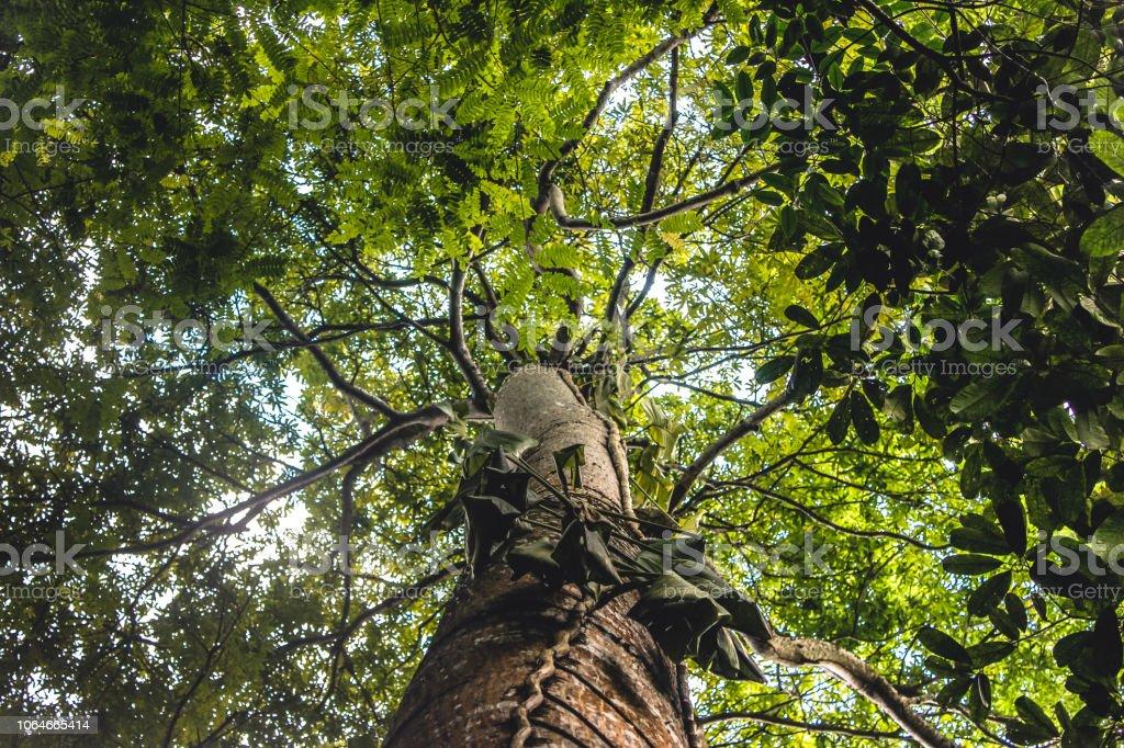 Copa de árvore - foto de acervo