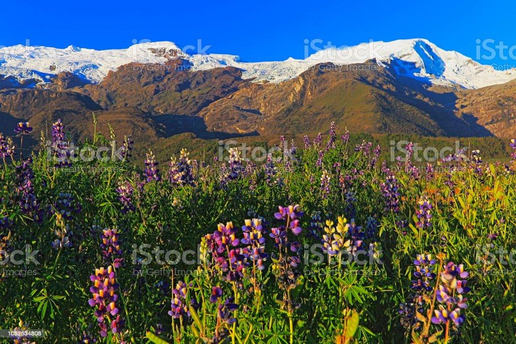 Copa de montanhas na Cordilheira Blanca e canteiro de tremoço - Ancash, Peru - foto de acervo