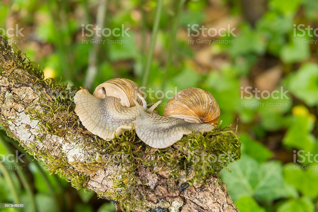 cople snail sunny summer day foto royalty-free