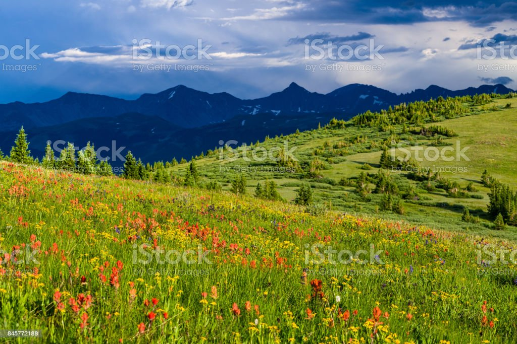 Copper Mountain Summer Wildflowers stock photo