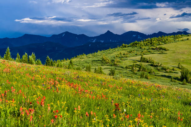 Copper Mountain Summer Wildflowers Copper Mountain Summer Wildflowers - Scenic view in the Tenmile Range. Copper Mountain, Colorado USA. vail colorado stock pictures, royalty-free photos & images