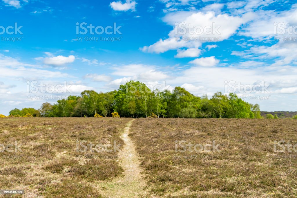 Copse in New Forest National Park in Hampshire UK stock photo