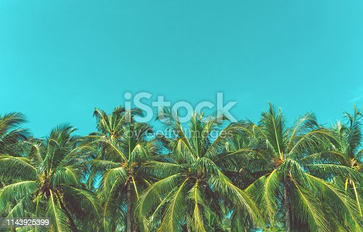 Copy space of silhouette tropical palm tree with sun light on sunset sky and cloud abstract background. Summer vacation and nature travel adventure concept. Vintage tone filter effect color style