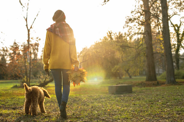 Copy space of woman walking her dog at the park and collecting autumnal leaves stock photo