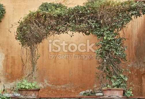 copy space on a wall surmounted by a gracious plant