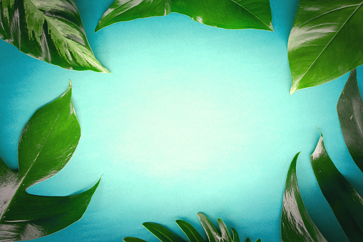 Copy space with leave on green paper design for make natural background concept or green leave border.