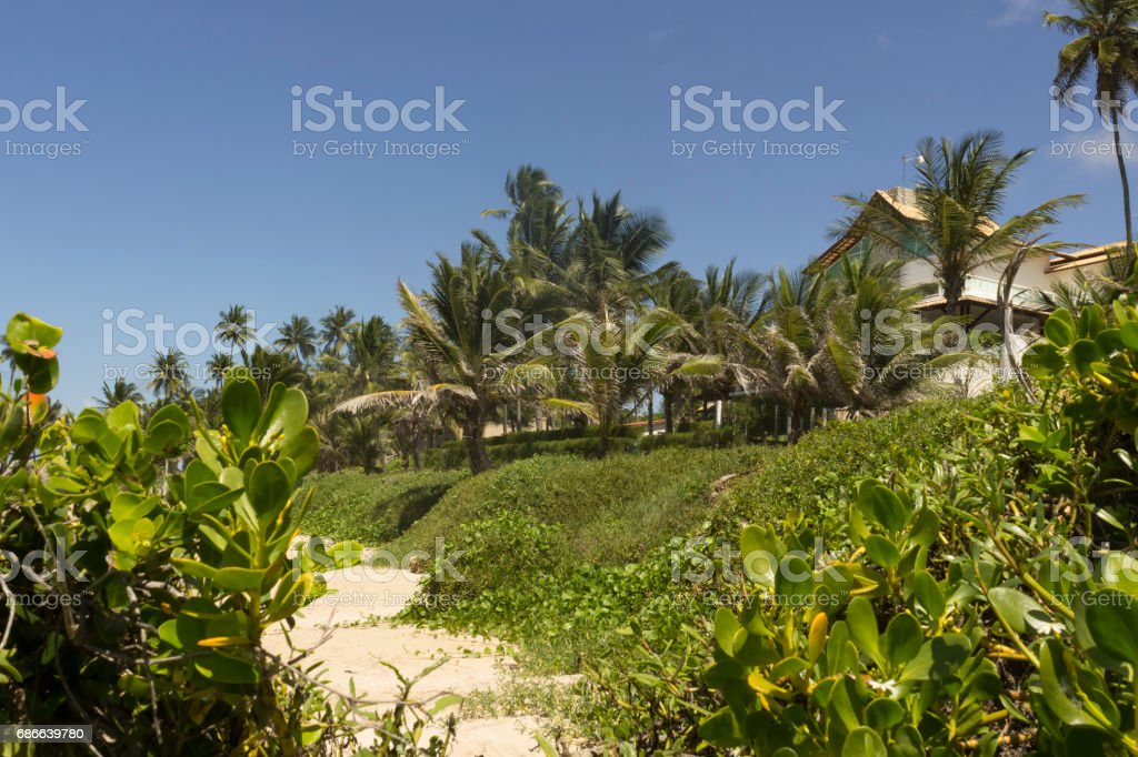 Coqueirinho beach Lizenzfreies stock-foto