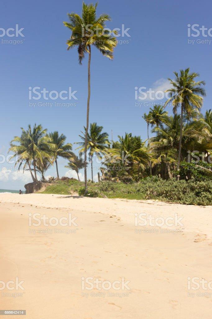 Coqueirinho beach Стоковые фото Стоковая фотография