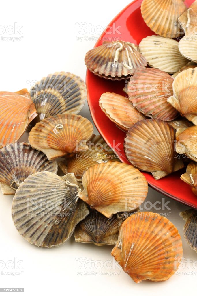 Coquille saint Jacques isolated on white background - Zbiór zdjęć royalty-free (Bretania)