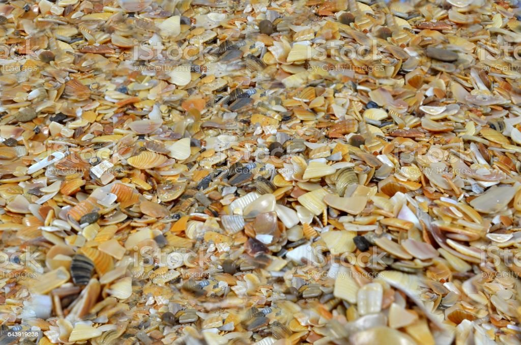Coquina - fragment of beach stock photo