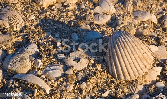 Coquina is a sedimentary rock composed chiefly of shell fragments. Because shells are made of calcium carbonate, coquina is formally a limestone San Ignacio Lagoon, Baja California, Mexico