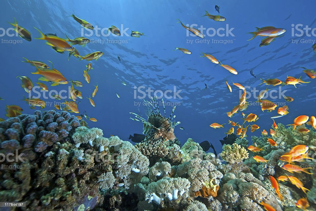 Coral and fish in the ocean stock photo