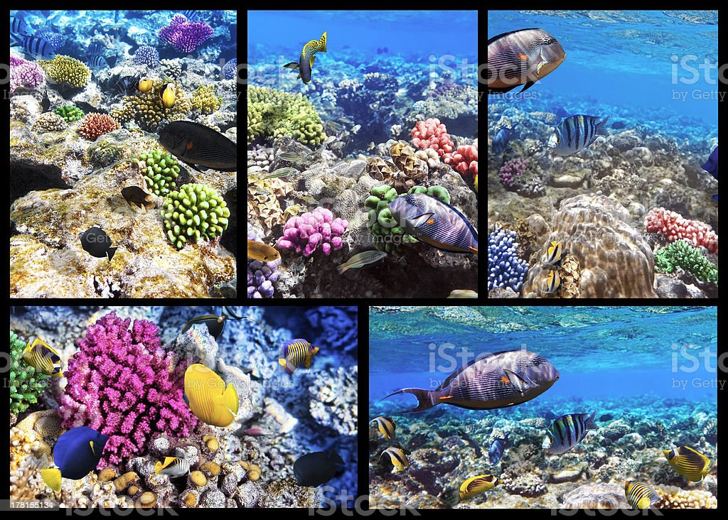 Coral and fish in the Red Sea. Egypt. Collage. royalty-free stock photo