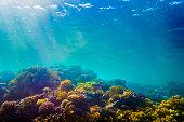 コーラルと魚の赤い海