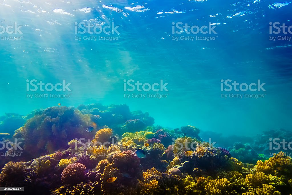 Coral and fish in the Red Sea stock photo