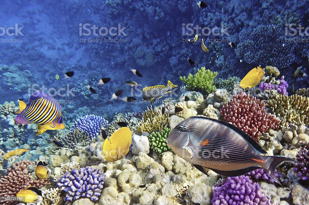 Coral and fish in the Red Sea.Egypt royalty-free stock photo