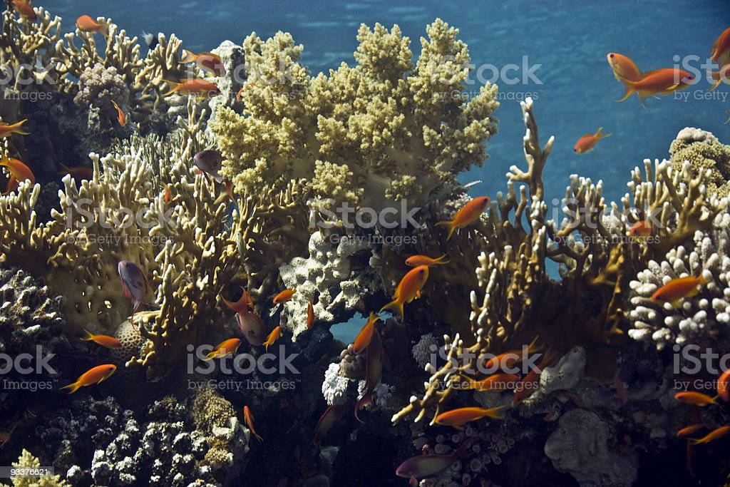coral and fish royalty-free stock photo