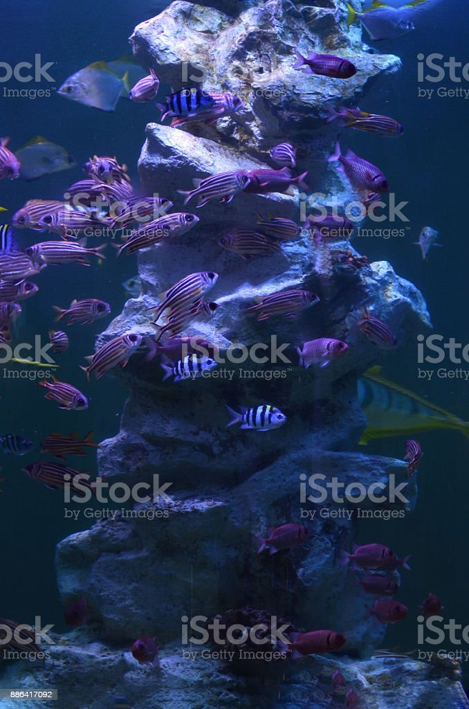 coral and sea fish in aquarium stock photo
