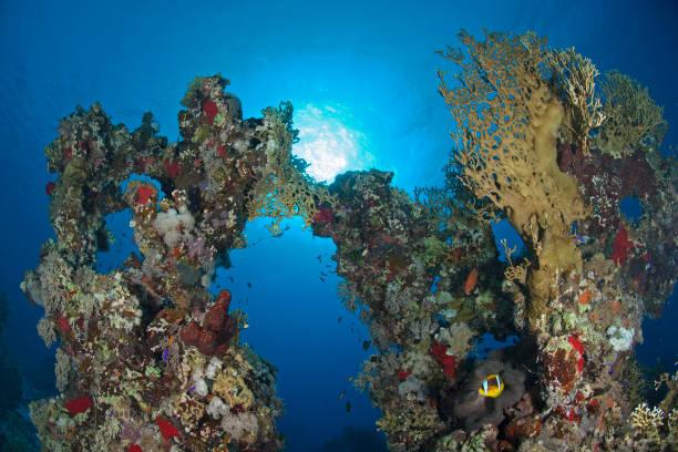 Korallen-Arch – Foto