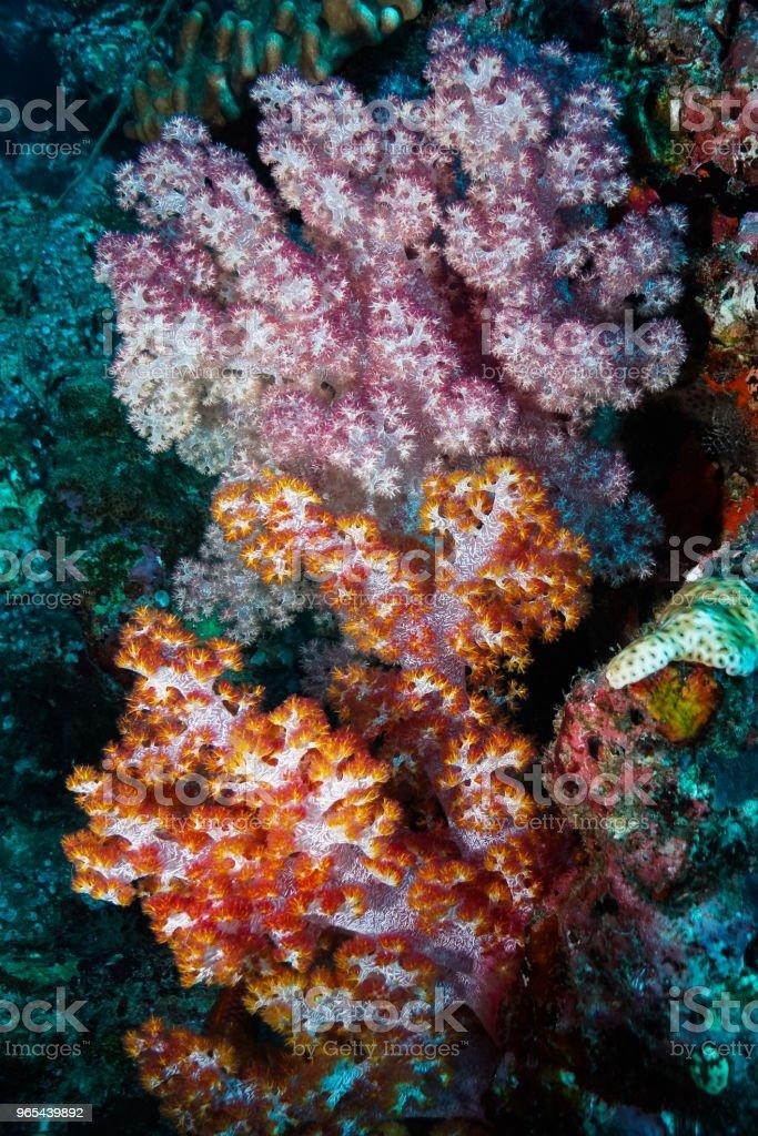 Coral at the Maldives royalty-free stock photo