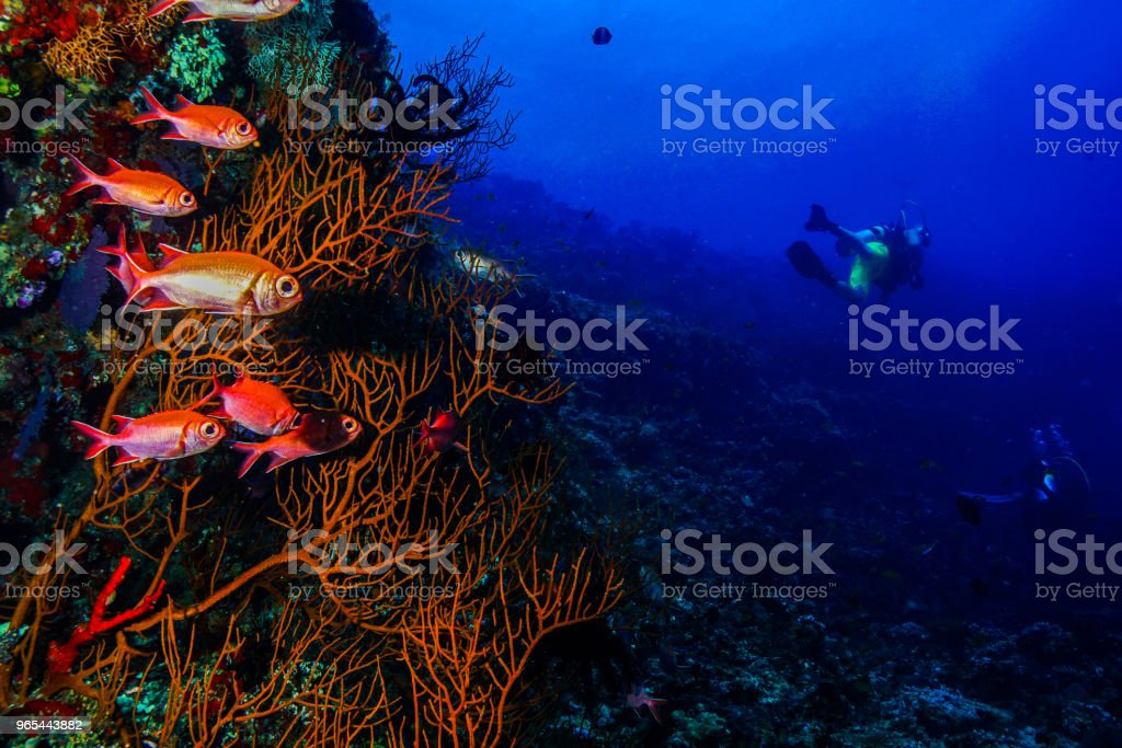 Coral at the Maldives royalty-free stock photo