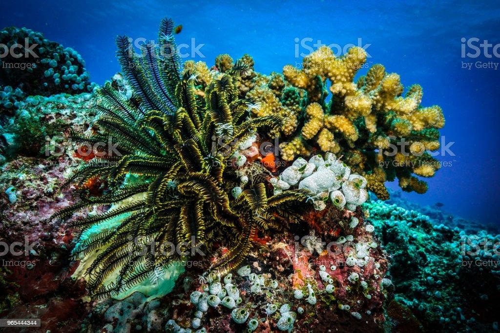Corail au Maldives - Photo de Aquarium - Établissement pour animaux en captivité libre de droits
