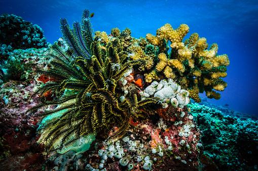 몰디브에서 산호 0명에 대한 스톡 사진 및 기타 이미지