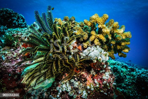 Coral At The Maldives - zdjęcia stockowe i więcej obrazów Akwalung