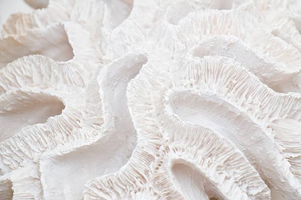 Coral Background stock photo