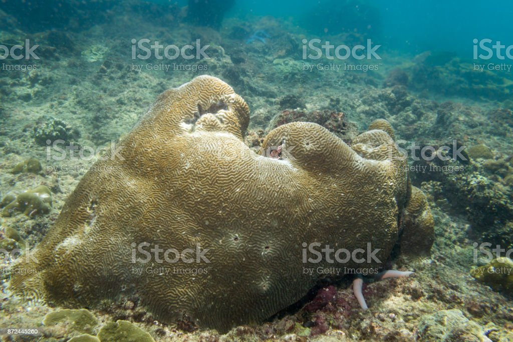 Coral Bleaching, Damaged Fragile Reef Ecosystem stock photo