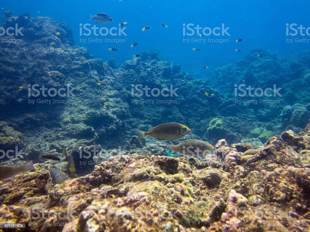 Coral Bleaching (phylum Cnidaria) Global Warming Phi Phi Tropical Fish stock photo