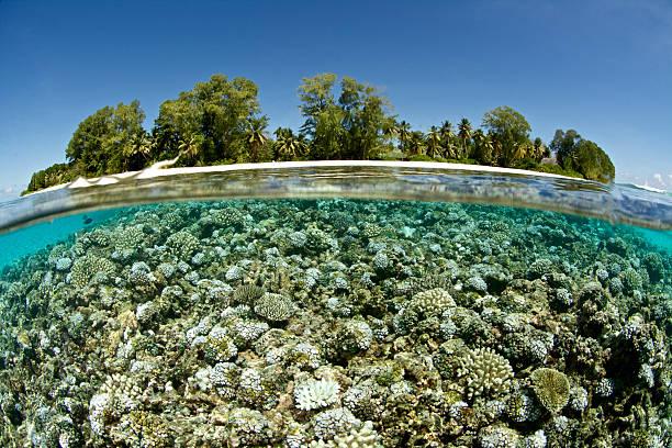 coral bleichen - die toteninsel stock-fotos und bilder