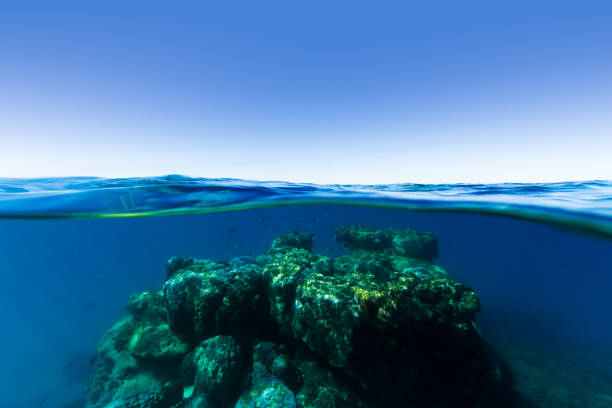 Coral Bommie on The Great Barrier Reef stock photo