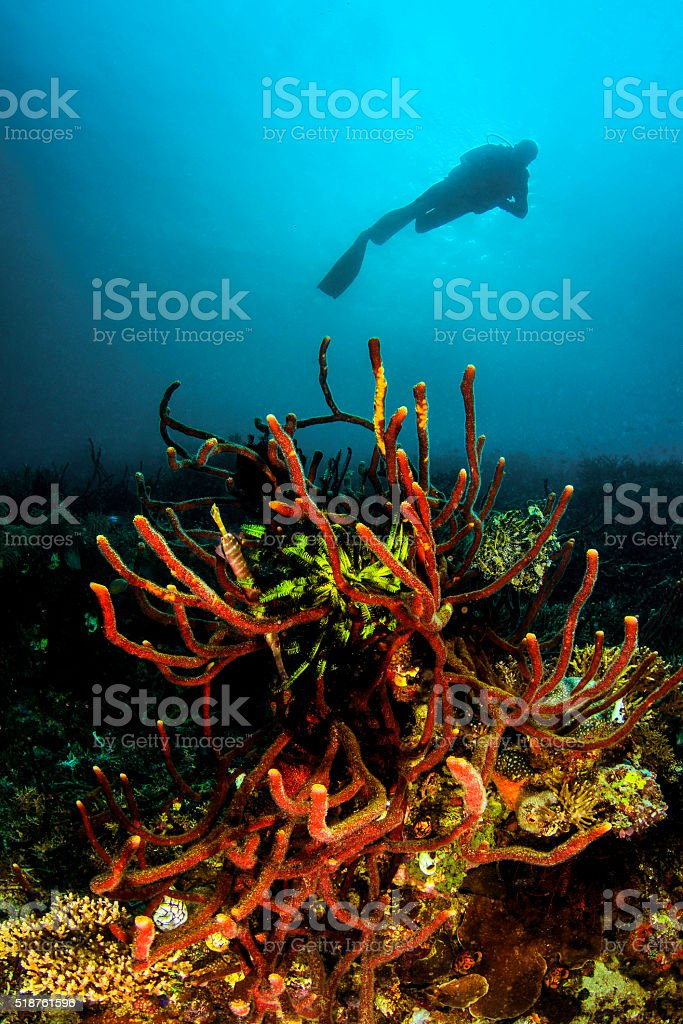 Coral Branches stock photo