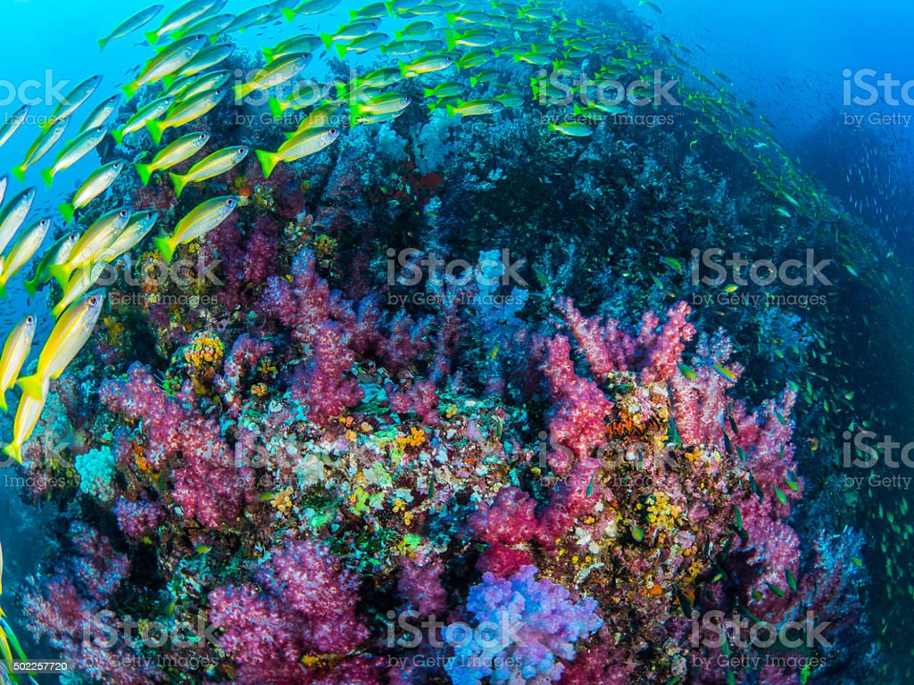 Coral Colorful stock photo