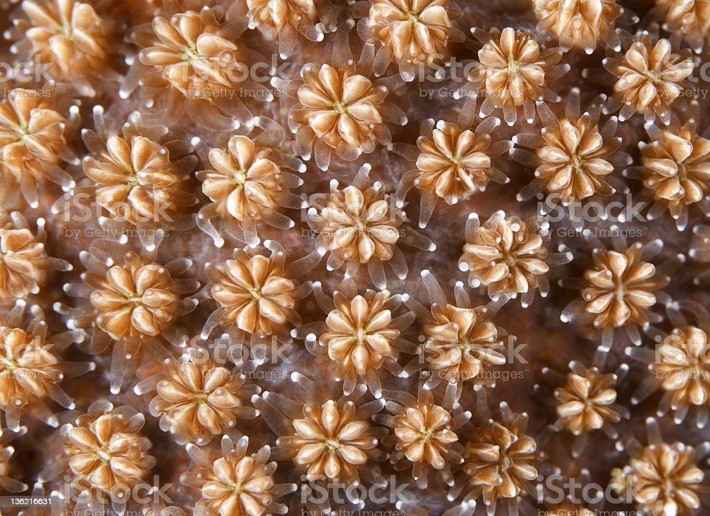 Coral detail royalty-free stock photo