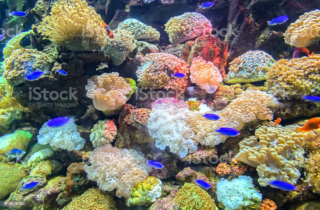 Coral ecosystems aquarium stock photo