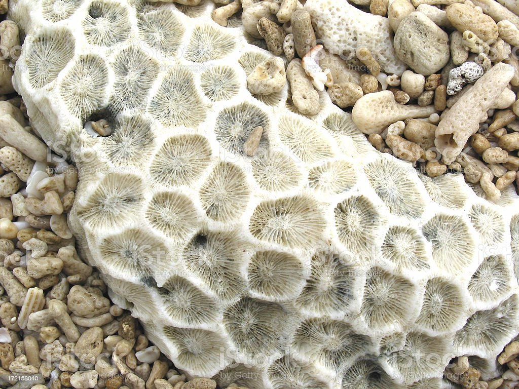 Coral from the Great Barrier Reef royalty-free stock photo